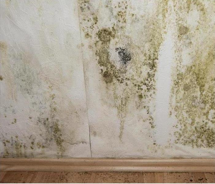 Mold Remediation Be Flood Smart