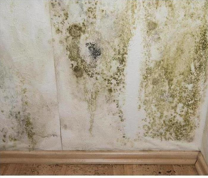 Mold Remediation Mold Damage Removal, Oak Ridge TN